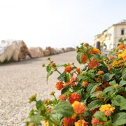 flowers along the coast in Marina di Pisa