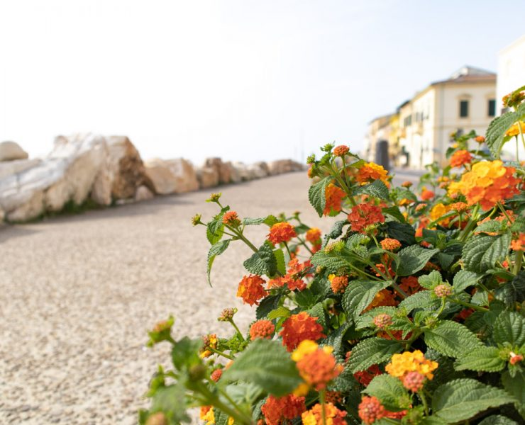 flowers along the coast in Marina di Pisa