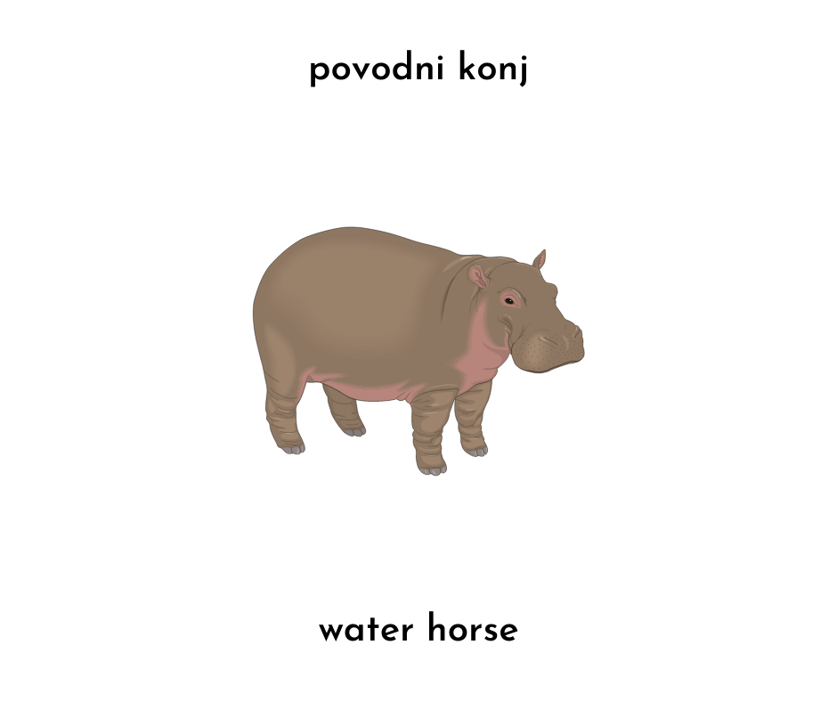 photo of a hippo and povodni konj (slovenian) and water horse (literal english translation)